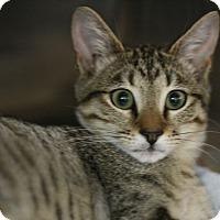 Adopt A Pet :: Jayson - Canoga Park, CA