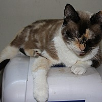 Adopt A Pet :: Majesta - Torrance, CA