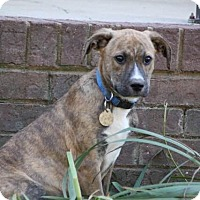 Adopt A Pet :: Trooper - Knoxville, TN