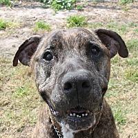 Adopt A Pet :: Indy - Odessa, FL