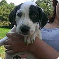 Adopt A Pet :: Pippen - WARREN, OH