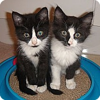 Adopt A Pet :: Luciano and Figaro - Miami, FL