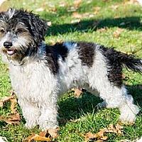 Adopt A Pet :: Gregarious Guru - Brooklyn, NY
