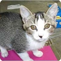 Adopt A Pet :: Booger - Davis, CA