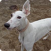 Adopt A Pet :: Cheryl - Roanoke, VA