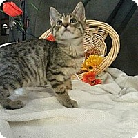 Adopt A Pet :: Hanks - Clearfield, UT