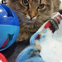 Adopt A Pet :: Big MaC - Harrisburg, NC