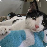 Adopt A Pet :: CASH - Brea, CA