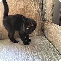 Adopt A Pet :: Clavin - Simpsonville, SC