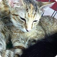 Adopt A Pet :: Hermoine & Jelicka - Seminole, FL