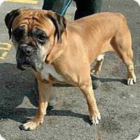 Adopt A Pet :: Silver - Ashtabula, OH