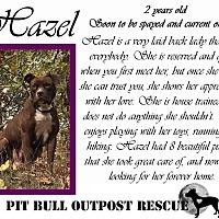 Adopt A Pet :: Hazel - Lafayette, OR