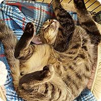 Adopt A Pet :: Trooper - Salisbury, MA