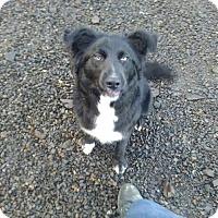 Adopt A Pet :: Jackson - Tillamook, OR