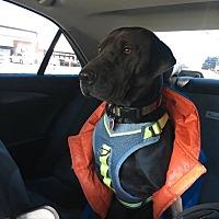Adopt A Pet :: Sara - Rowlett, TX