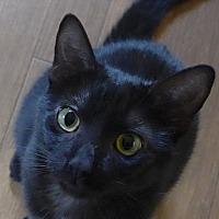 Adopt A Pet :: Buffet - Manning, SC