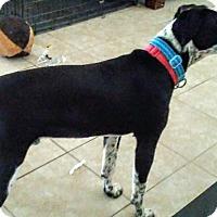 Adopt A Pet :: Dakota - Nixa, MO
