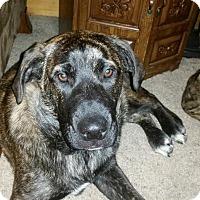 Adopt A Pet :: Carson - DeForest, WI