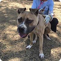 Adopt A Pet :: Mooki - Phoenix, AZ