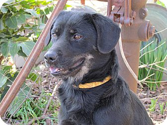 Shepherd (Unknown Type)/Terrier (Unknown Type, Medium) Mix Dog for adoption in Humboldt, Tennessee - BELLA