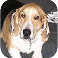 Adopt A Pet :: Phoebe - Phoenix, AZ