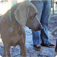 Adopt A Pet :: Velvet - Scottsdale, AZ