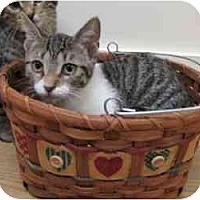 Adopt A Pet :: Miss Mousey - Milwaukee, WI