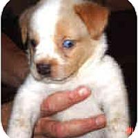 Adopt A Pet :: Crockett - Mesa, AZ