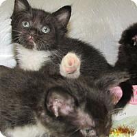 Adopt A Pet :: Deb - Athens, GA