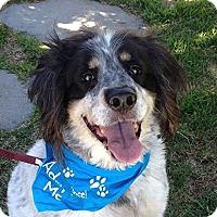 Adopt A Pet :: Lennie - Canoga Park, CA