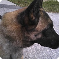 Adopt A Pet :: Lady - Inverness, FL