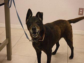 German Shepherd Dog Mix Dog for adoption in Malabar, Florida - Nina