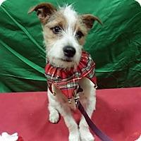 Adopt A Pet :: PJ-Adopted! - Detroit, MI