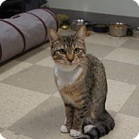 Adopt A Pet :: Ella - Libby, MT
