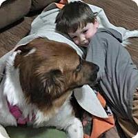 Adopt A Pet :: Sweet Bella Boo - Plainfield, CT