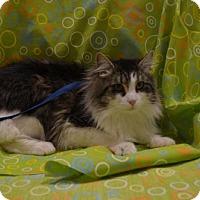Adopt A Pet :: Teddy - Brownsboro, AL