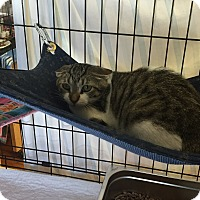 Adopt A Pet :: Givenchy - Lunenburg, MA
