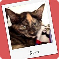 Adopt A Pet :: Kyra - Tombstone, AZ