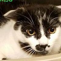 Adopt A Pet :: Cory - Herndon, VA