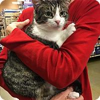 Adopt A Pet :: Prue - Athens, GA