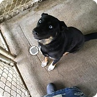 Adopt A Pet :: Aragorn - Bedford, IN
