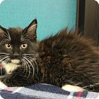 Adopt A Pet :: Dillon - Benbrook, TX