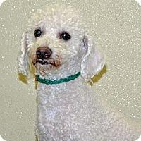 Adopt A Pet :: Eli - Port Washington, NY
