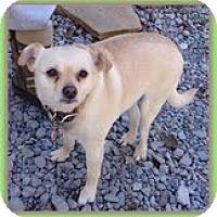 Adopt A Pet :: Clarice (URGENT) - Staunton, VA