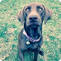 Adopt A Pet :: Marley - Marlton, NJ