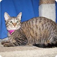 Adopt A Pet :: Italy - Colorado Springs, CO