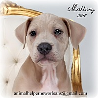 Adopt A Pet :: Mallory - New Orleans, LA