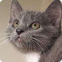 Adopt A Pet :: Tiffany - Irvine, CA