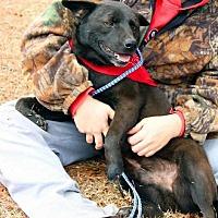 Adopt A Pet :: Choco - Claymont, DE