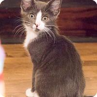 Adopt A Pet :: Calder - Chicago, IL